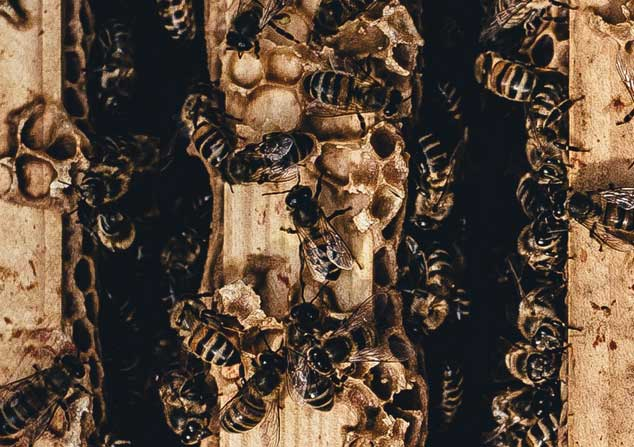 Brands Bee-Having Badly: Finding Hope Through Biomimicry in an Era of Corporate Misconduct