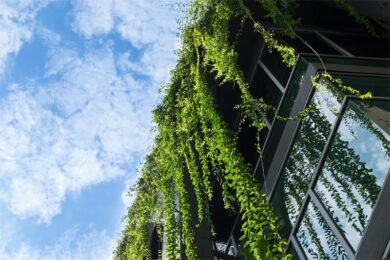 More Than a Green Wall: The Science Behind Biophilic Design